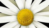 Daisies_on_Green_Wipe